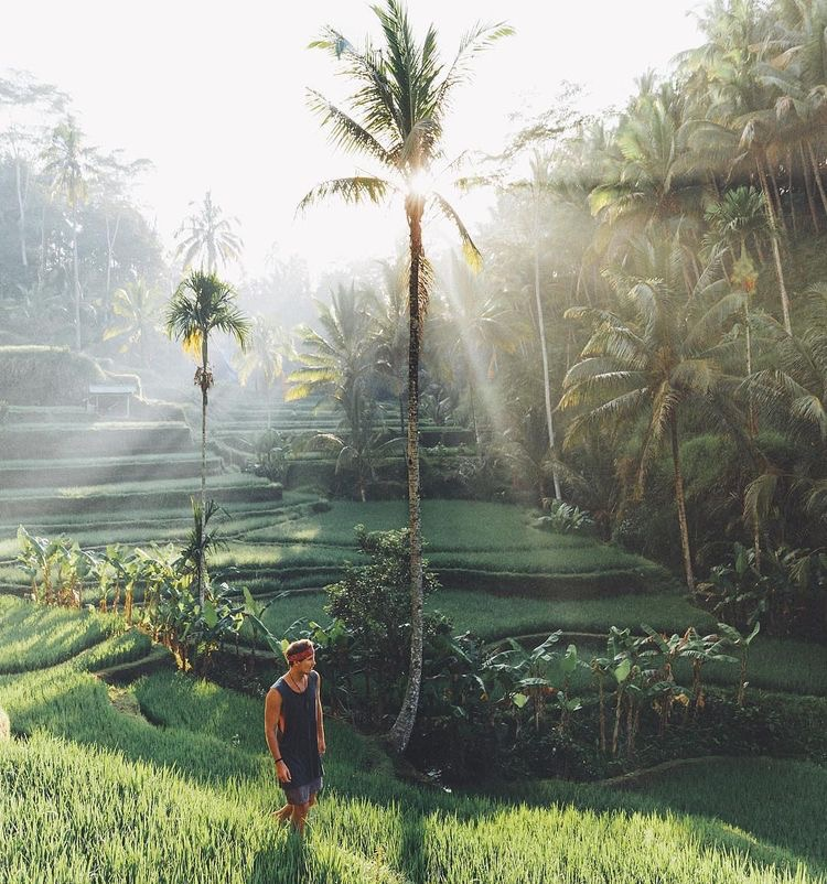 Tegallalang Rice Terraces in Bali