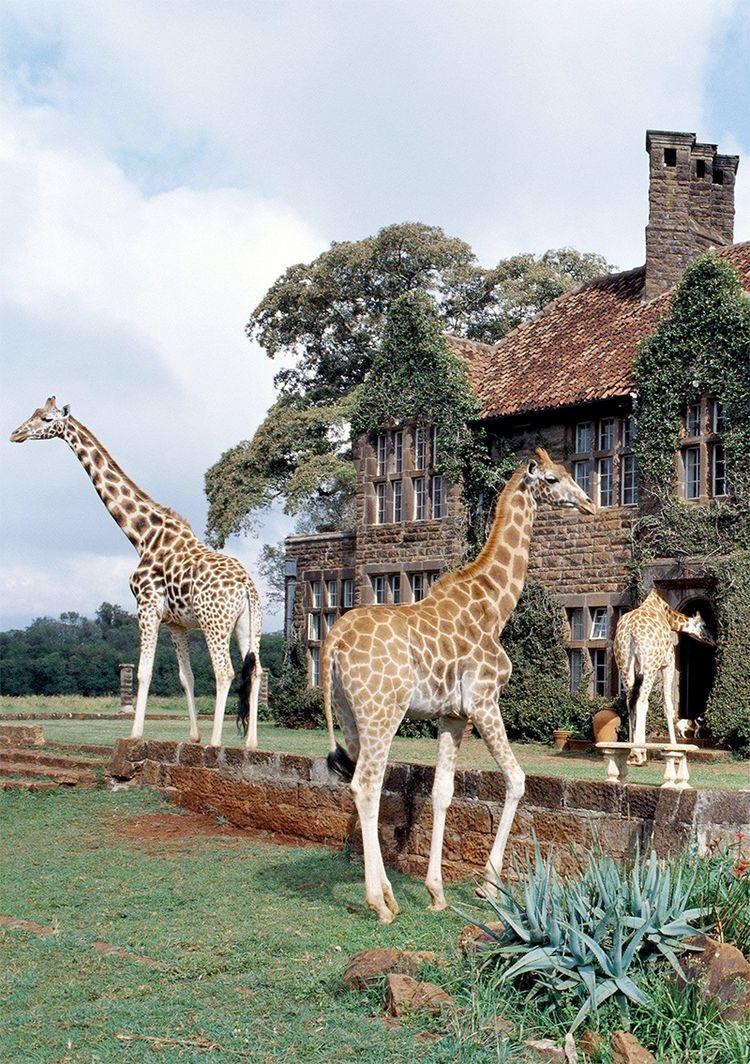Giraffe Manor, Nairobi Kenya